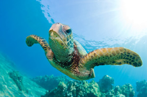 Free Turtle Trading Download Plus More Bitcoin Madness!